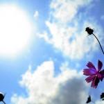 過剰なUVケアはNG!太陽の恵み『サンシャインビタミン』